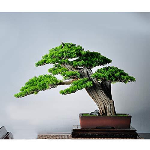 Planta De Acuario 36cm  marca jbshop