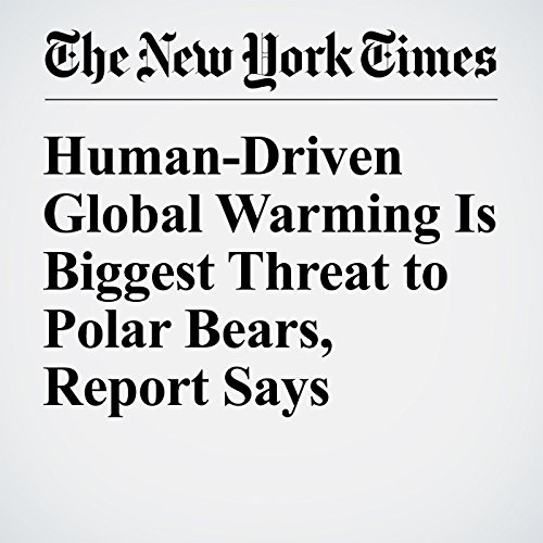 Human-Driven Global Warming Is Biggest Threat to Polar Bears, Report Says copertina