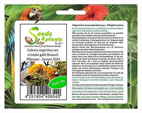 Stk - 30x Celosia argentea var. cristata gelb Strauch Pflanzen - Samen ID24 - Seeds Plants Shop Samenbank Pfullingen Patrik Ipsa