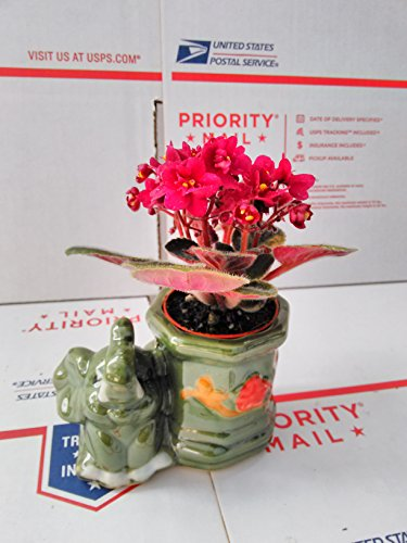 Novelty African Violet -3''with Elephant...