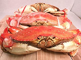 FRESH Cooked DUNGENESS CRABS (3 Large Crabs)