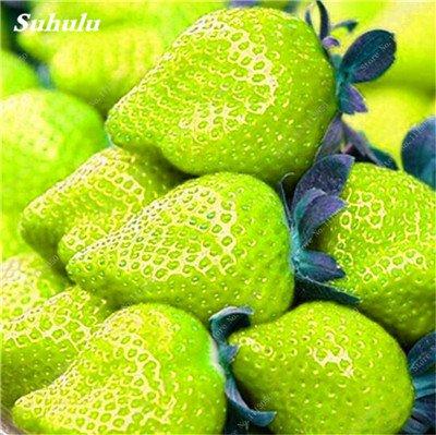 Grosses soldes! 200 Pcs Escalade Graines de fraises non-OGM Tropical Fruit Graines Cour et Balcon extérieur Plantons pour jardin 18