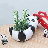 Binoster Macetas de Plantas, Lindas macetas con Forma de Animales de Dibujos Animados florero macetas, contenedores, macetas de decoración del hogar, Mini Ornamento de Escritorio (Tortuga) (Panda)