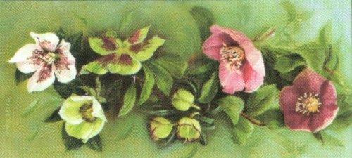 Sicherheit Brieföffner–helebores Blumen