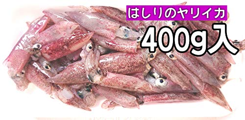 産直丸魚 岩手洋野町産 はしりのヤリイカ 400g入 さっとボイルしておいしい、シーズン初めのヤリイカ イカ 槍いか やりいか 槍烏賊
