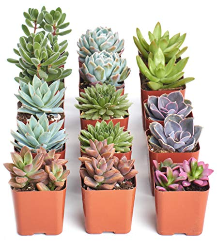 Shop Succulents | Assorted...