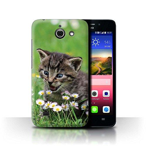 Stuff4 Hülle/Hülle für Huawei Ascend Y550 LTE/Inländisches Kätzchen/Blumen Muster Katze/Katzenrassen Kollektion