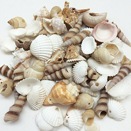 PEPPERLONELY Small Drilled Shell Mix Sea Shells, 6 OZ Apprx. 60+ PC Shells, 1-1/2 Inch