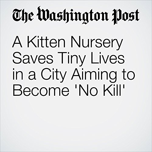 A Kitten Nursery Saves Tiny Lives in a City Aiming to Become 'No Kill' copertina