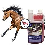 Amino Liquid I Acides aminés vitamines pour chevaux I Complexe de vitamine I Lysin Plus Zinc I Développement musculaire pour chevaux I Chevaux énergiques I Muscle Plus Cheval & Chevaux de sport 1 L