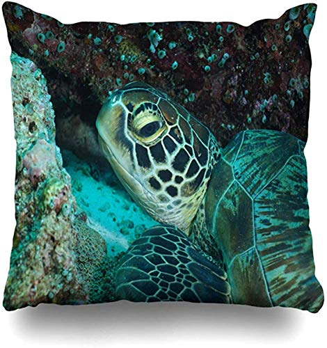 BONRI Throw Pillow Cover Guraidhoo Turtle Maldives Dive in Nature Sea Life Underwater Wild Design Funda de Almohada para el hogar Funda de Almohada Decorativa Cuadrada con cremallera18x18pulgada