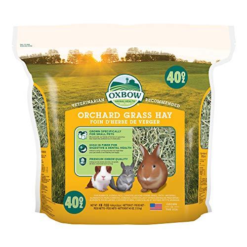 Orchard Grass Heno para Mascotas pequeñas Oxbow, 1,13kg ⭐