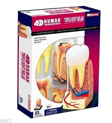 4D Puzzle Human Triple Root Molar Tooth Anatomy Study Series 3D Model New