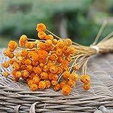 SJZS Artificial y Flores secadas 50pcs / Lot Decoración Ramo de Flores secas secas Naturales Fiesta de la Boda Flores Decorativo fotografía apoya (Color : Orange)