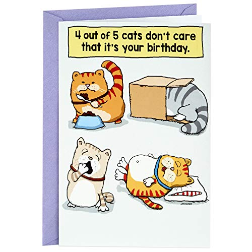 Hallmark Shoebox Funny Birthday Card (Cats Don't Care That It's Your Birthday)