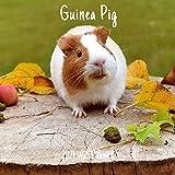 Guinea Pig 2021 Wall Calendar: Cute Guinea Pig 2021 Wall Calendar, 18 Months.