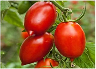 David's Garden Seeds Tomato Paste Amish SL3817 (Red) 50 Non-GMO, Organic, Heirloom Seeds