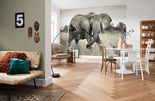 Komar - fleece fotobehang ELEPHANT - 368 x 248 cm - behang, wand, decoratie, muurbehang, wanddecoratie, olifant, diermotief, woonkamer - XXL529
