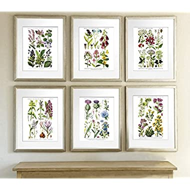 English Wild Flowers Botanical Art Reproduction Unframed Set of Six Wall Art Prints