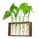 Ivolador Wall Mounted Hanging Plants Test Tube Flower Bud Tabletop Glass Terrarium Wooden Stand with 5 Test Tube Perfect for Propagating Hydroponic Plants Home Garden Wedding Decoration