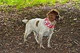 Ruffnek Halstuch für Hunde, reflektierend, gut sichtbar, mit Tatzen-Knochen-Abdruck, Rot - 4