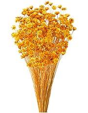 大地農園 ドライフラワー スターフラワー・ブロッサム(18g入り) オレンジ DO30191-351