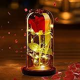 DASIAUTOEM Rosa Eterna, Bella e la Bestia Rose Kit Rosa Incantata con Luci LED Elegante Cupola di...