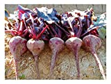 Premier Seeds Direct Blood's Blood Beetroot contiene 600 semi più fini