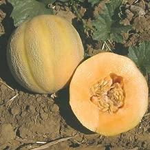 12+ Cantaloupe Seed: Minnesota Midget Cantaloupe Seed Fresh