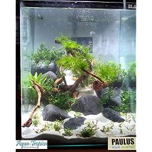 Blau-Aquaristic-Nano-Aquarium-Cubic-10-Liter-Basis-Glas-Aquarium