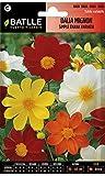 Semillas de Flores - Dalia Mignon simple enana variada - Batlle