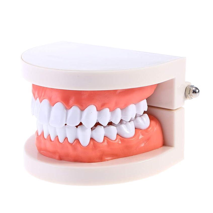 チューブ惑星表面的なHealifty 教育のための2pcs歯科指導モードの携帯用シミュレーションの歯型の口頭デモンストレーションモデル
