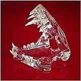 FHUILI Denti di Animale Modello - Denti Cat Trasparenti Jaw Model - Medical anatomico Cat Teeth Model - veterinari Studio Mostra didattica, Materiale di Laboratorio
