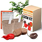 Trinidad Moruga Scorpion and Chocolate Habanero Chili Grow Kit - All in One Pepper Seed Plant Growing Kit Gift
