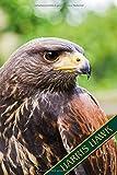 Harris Hawk: Wüstenbussard, Harris Hawk, Parabuteo Unicinctus. Format A5, 120 Seiten, dezent grau liniert. Notizbuch, Journal, Merkheft, ... Ornithologen, Naturkundler, Vogelschützer