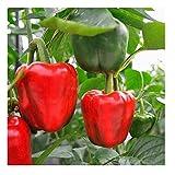 David's Garden Seeds Pepper Bell Yankee Bell 6201 (Red) 25 Non-GMO, Open Pollinated Seeds...