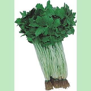 japanese parsley mitsuba