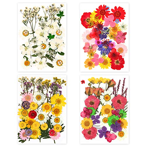 HSJL Real Dried Pressed Flowers and Leaves for Crafts - Colorful Pressed Flowers Daisies for DIY Candle Resin Jewelry Nail Pendant Crafts Making Art Floral Decors (135PCS)