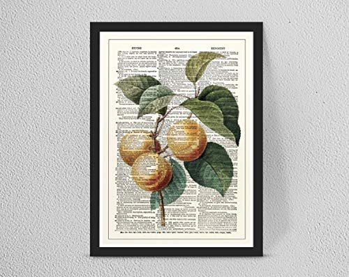 Retro/Vintage Dictionary Print, Botanical Fruit Leaf Art Plants, Home Decor...