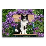 CALVENDO Premium Textil-Leinwand 75 x 50 cm Quer-Format Katze sitzt auf einem Gartenstuhl vor blauen Blüten, Leinwanddruck von Katho Menden