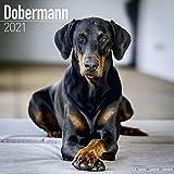 Dobermann 2021 Wall Calendar (Square)