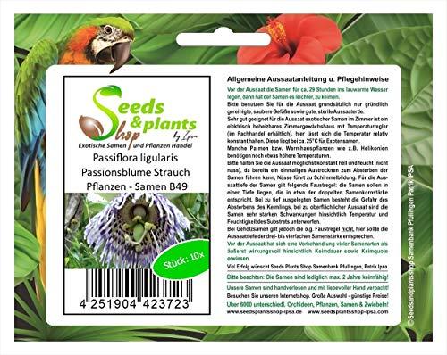 Stk - 10x Passiflora ligularis Passionsblume Strauch Pflanzen - Samen B49 - Seeds Plants Shop Samenbank Pfullingen Patrik Ipsa