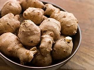 Jerusalem Artichoke (Organic) 1.5 Pounds