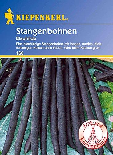 Bohnen - StangenBohnen - Blauhilde von Kiepenkerl