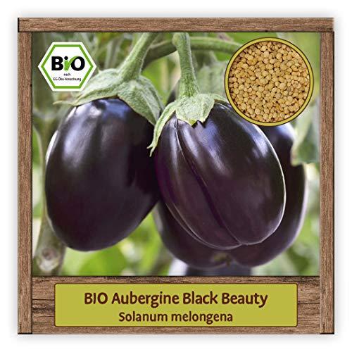 BIO Aubergine Samen Sorte Black Beauty (Solanum melongena) Gemüsesamen Eierfrucht Saatgut