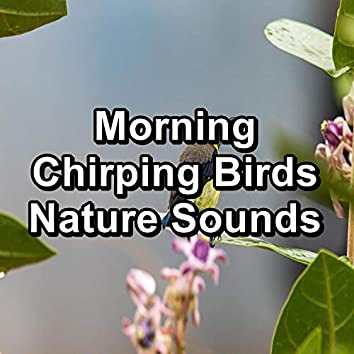 Morning Chirping Birds Nature Sounds