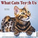 What Cats Teach Us 2020 Wall Calendar