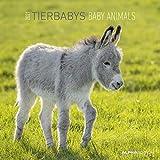 Tierbabys 2021 - Broschürenkalender 30x30 cm (30x60 geöffnet) - Baby Animals - Bild-Kalender - Wandplaner - mit Platz für Notizen - Alpha Edition