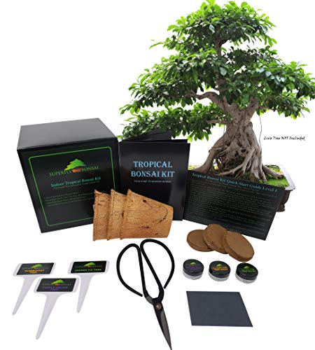 Tropical Indoor/Outdoor Bonsai Seed Kit (Tropical Level 1)