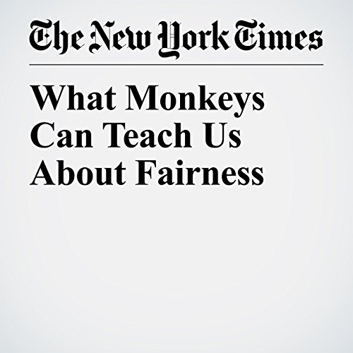 What Monkeys Can Teach Us About Fairness copertina
